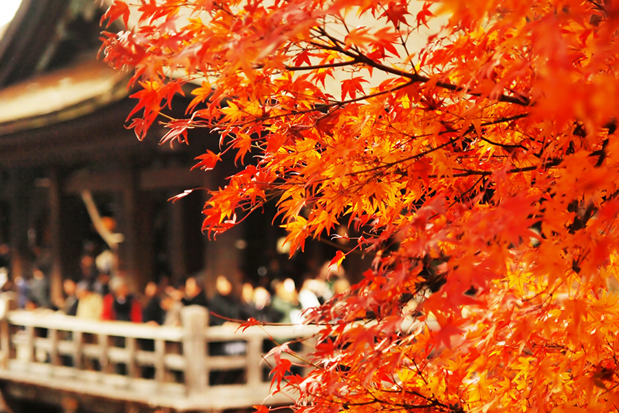 秋の京都の決定版!京都五条大宮にオープン